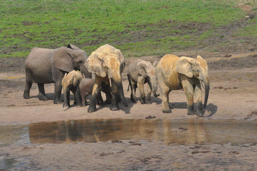 Elephant Path still